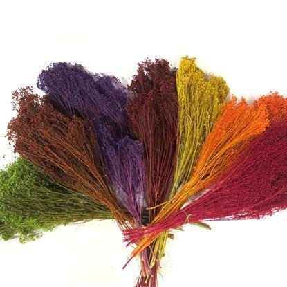 Obrázek Broom bloom barevný (svazek)