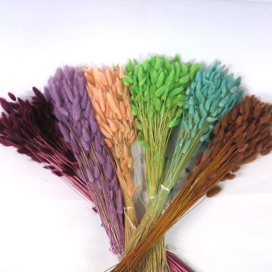 Obrázek z Lagurus barevný (svazek)