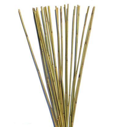 Obrázek Tyč bambusová 120 cm, 10-12 mm