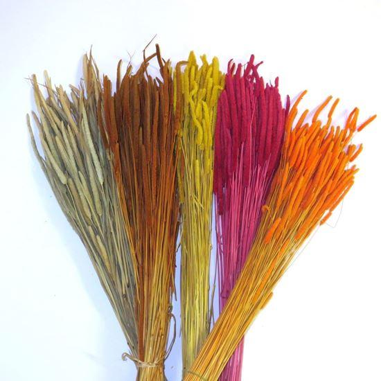Obrázek z Phleum code - přírodní, barevné (svazek)