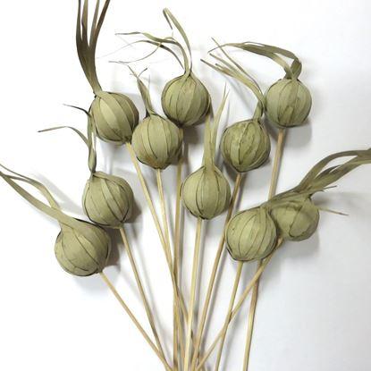 Obrázek Khej onion - přírodní, na stonku (10ks)