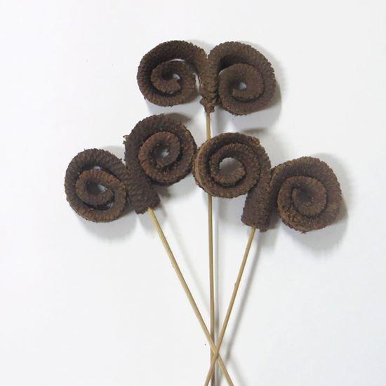 Obrázek z Palm ring - přírodní, na stonku (10ks)