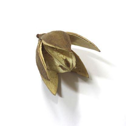 Obrázek Wild lily - přírodní (20ks)