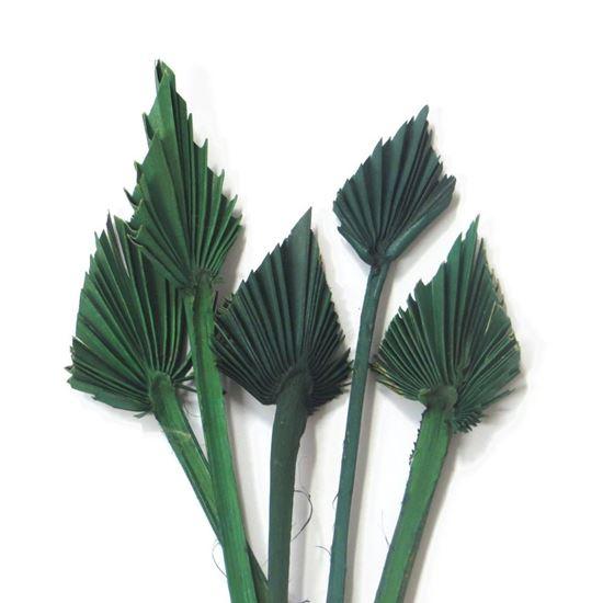 Picture of Palm spear mini - zelený (10ks)