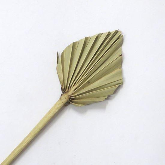Picture of Palm spear small - přírodní (10ks)