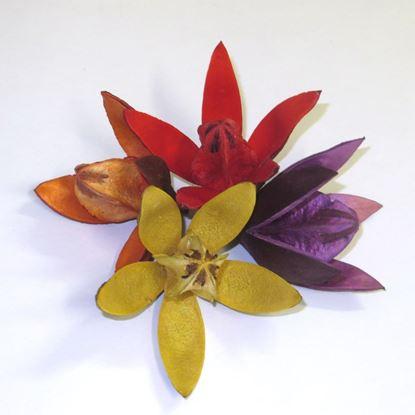 Obrázek Wild lily - barevná (20ks)