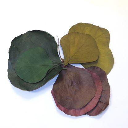 Obrázek Cobra leaves - barevné (50ks)