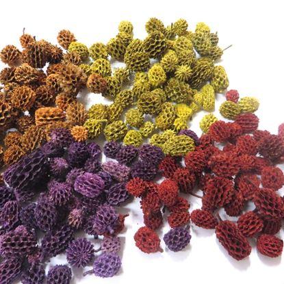 Obrázek Casurina - barevná (1kg)