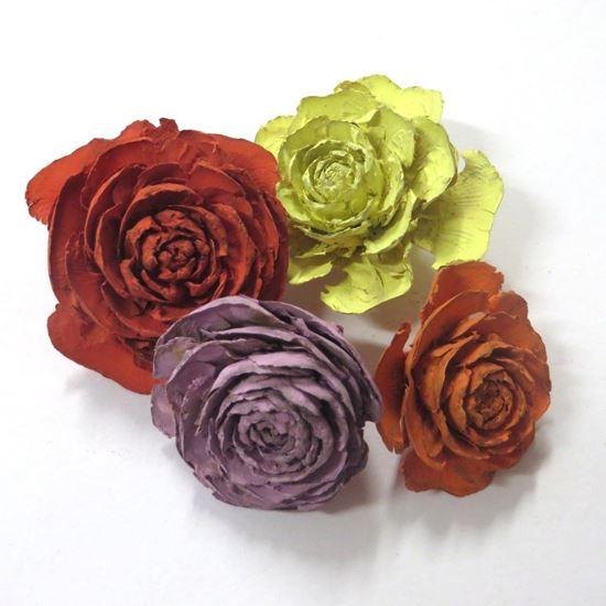 Picture of Cedar rose - barevná (25ks)