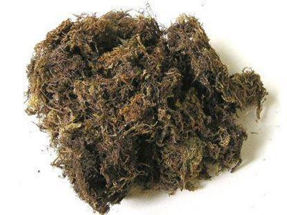 Obrázek Mech - přírodní (0,1kg)