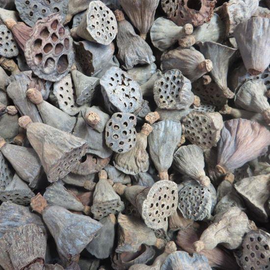 Obrázek z Lotus pod mini - přírodní (100ks)