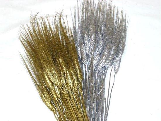 Picture of Grano triticum (pšenice) - zlatá, stříbrná (svazek)