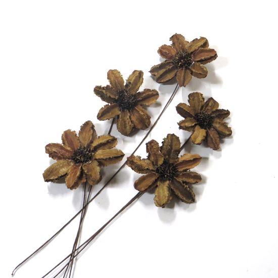 Picture of Arjun sunflower - přírodní, na stonku (15ks)